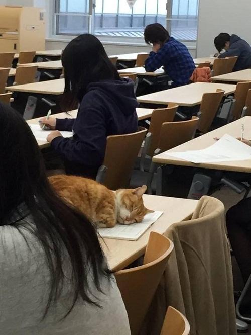 Dành cả tuổi thanh xuân để ngủ trong lớp học.