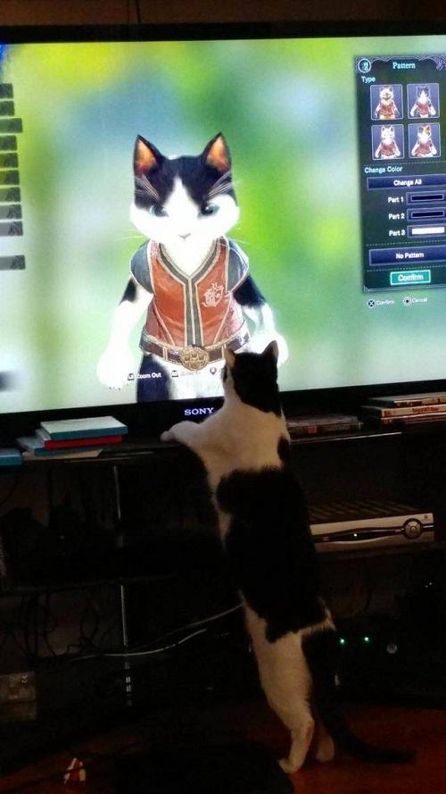 Thần tượng của mèo.
