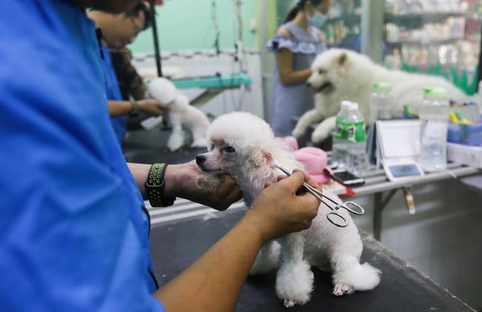 Dịch vụ làm đẹp cho chó đắt khách ngày Tết ở Sài Gòn