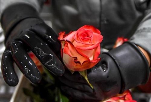Công nhân kiểm tra hoa trước khi đóng gói trong xưởng. Ảnh: AFP.