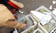 Gần 300 kg nội tạng động vật bốc mùi trên đường ra Hà Nội