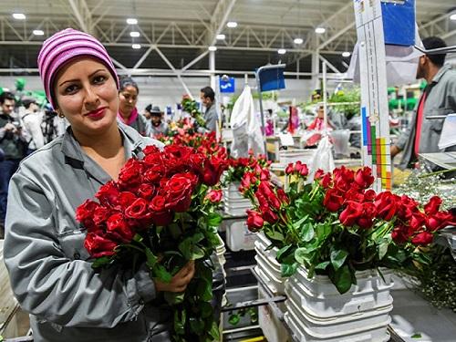 Mendez trong xưởng đóng gói hoa xuất khẩu ở gần thủ đô Bogota. Ảnh: AFP.