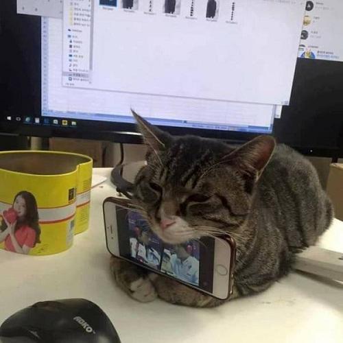 Tác dụng khác của mèo.