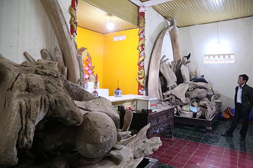 Hai bộ xương dự định được Sở Du lịch Quảng Bình xây nhà trưng bày, sắp xếp lại thành hình hài như con cá voi.Ảnh:Hoàng Táo