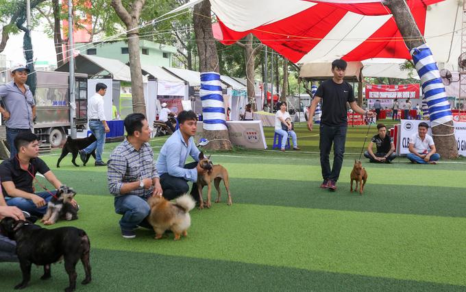 Bỏ tiền triệu học cách dắt chó đi thi nét đẹp ở Sài Gòn