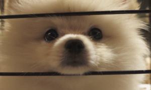 Người Sài Gòn chi tiền triệu gửi thú cưng đi chơi Tết