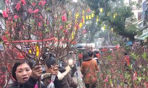 Chợ hoa mỗi năm chỉ họp dịp Tết ở phố cổ Hà Nội