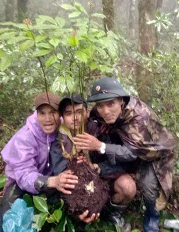 Anh Giới cùng hai người bạn đào được củsâm Ngọc Linh tự nhiên. Ảnh: H.T.