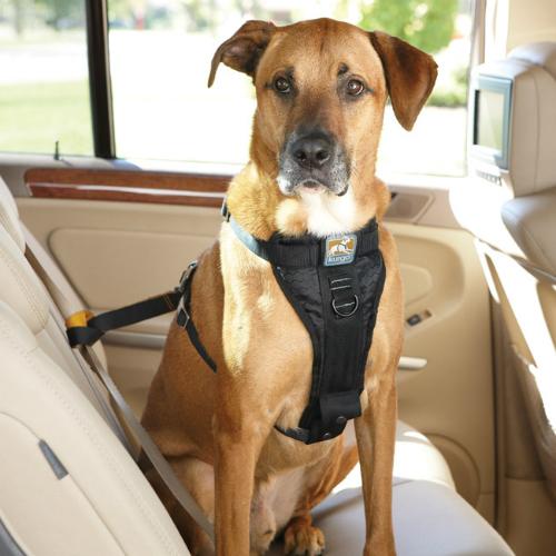 Dây an toàn cho chó thiết kế để tăng cường an toàn khi bạn và con chó đang trên đường. Tương tự như dây an toàn cho người, cũng có tác dụng khi có va chạm mạnh.