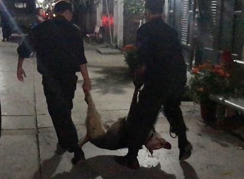 Chú chó của gia đình nạn nhân được đưa về trụ sở. Ảnh: Quốc Thắng.