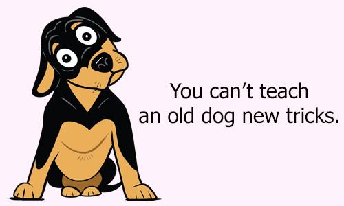 Thành ngữ tiếng Anh với dog - 3