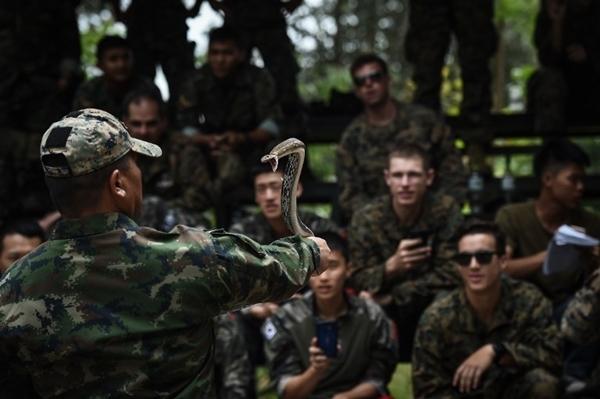 Một lính thủy đánh bộ Thái Lan khống chế rắn hổ mang trước các binh sĩ Mỹ, Hàn Quốc, trong tập trận Hổ mang Vàng ở Thái Lan ngày 19/2. Ảnh: AFP.