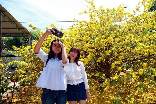 Du khách chụp ảnh bên cội mai vàng ở Đồng Nai sáng mùng 5 Tết. Ảnh: Phước Tuấn