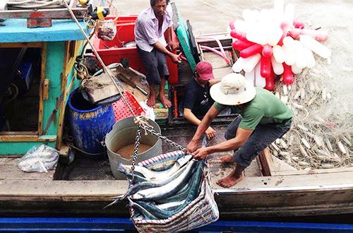 Các vựa thu mua hải sản ở cửa biển Cà Mau nhộn nhịp khi tàu thuyền ra vào buôn bán liên tục. Ảnh: Phúc Hưng.