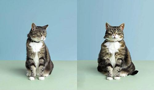 Sự khác biệt về cân nặng trước và sau Tết.