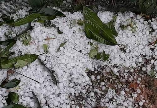Hạt đá sau trận mưa ở xã Châu Lý,huyện Qùy Hợpchiều 21/2. Ảnh:Phan Giang.