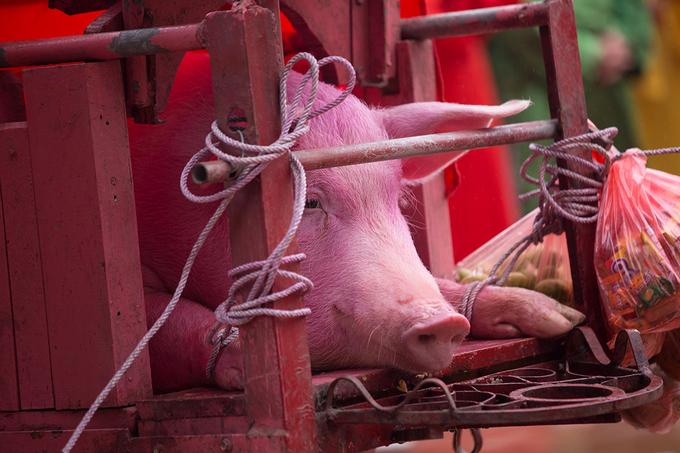 Nghi thức chém lợn Ném Thượng diễn ra kín đáo