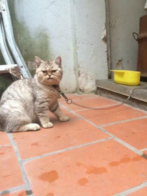Biểu cảm khó đỡ của mèo.