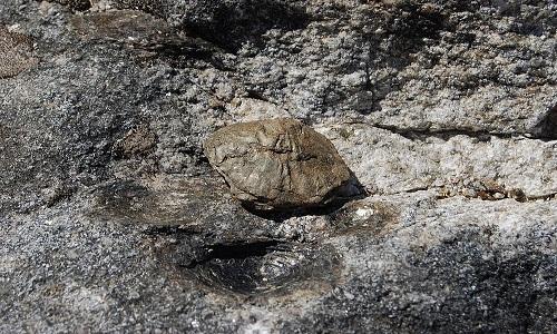 Một mấu nhỏ nhô lên trên mặt tảng đá sinh con. Ảnh: Wikimedia.