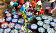 Ngư dân kiếm hơn 100 triệu đồng sau đêm đánh cá cơm đầu năm