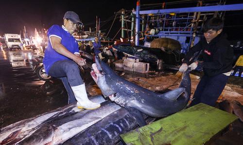 Ngư dân trúng 10 tấn cá sau chuyến đi xuyên Tết