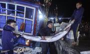 Ngư dân miền Trung trúng đậm luồng cá đầu năm