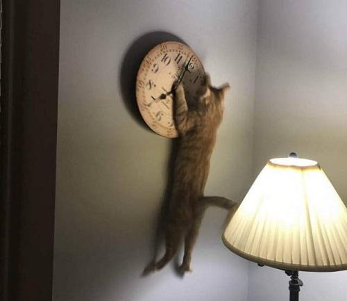Thợ sửa đồng hồ chuyên nghiệp.