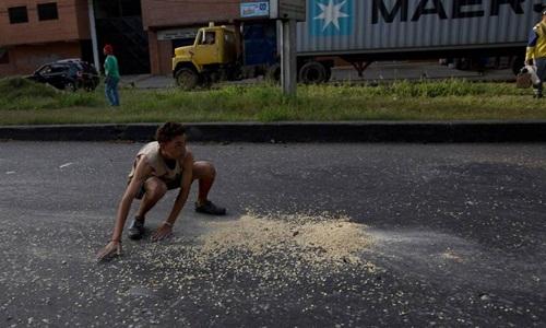Cậu bé cố gắng thu gom số ngô rơi rớt lại sau khi một chiếc xe tải chở ngũ cốc bị cướp trên đường phố Puerto Cabello, Venezuela. Ảnh: AP.
