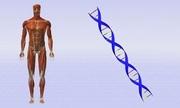 Hoạt động gene giúp xác định thời điểm tử vong ở người
