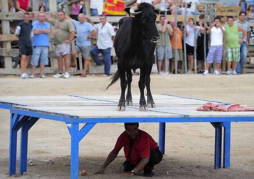 Đừng có ai chỉ con bò tôi ở ngay dưới nó nhé.