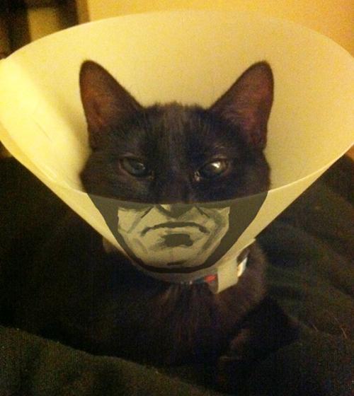 Cat Man là đây chứ đâu.