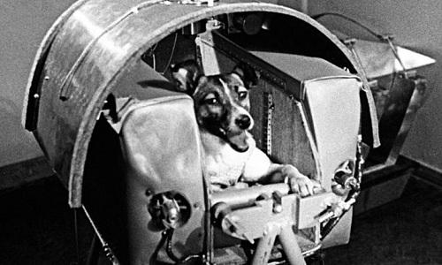 Laika là phi hành gia động vật đầu tiên trên thế giới. Ảnh: SCMP.