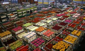 Chợ đấu giá hoa lớn nhất Amsterdam
