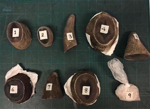 Số hàng cấm mà giới chức Singapore tịch thu từ hành lý của Nguyen Vinh Hai. Ảnh: AVA