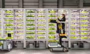 Trồng rau bán trong siêu thị bằng công nghệ vườn thẳng đứng