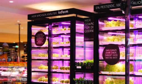 Với vườn Infarm, các siêu thị, nhà hàng có thể trồng rau ngay trong khuôn viên kinh doanh.