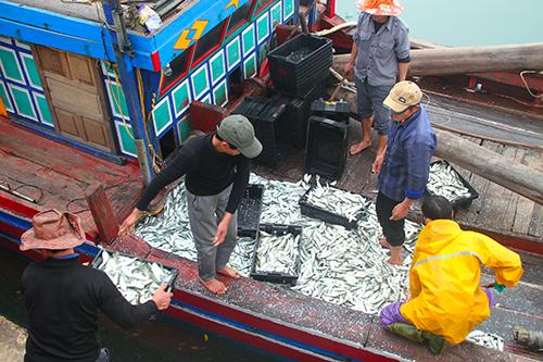 Ngư dân thay nhau vận chuyển cá lên bờ. Ảnh: Đức Hùng