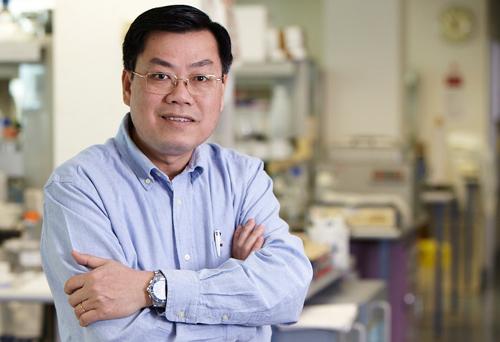 Giáo sư Nguyễn Văn Tuấn cho biết giáo sư ở Australia được xem là chức vụ, nên không ai giữ chức này suốt đời. Ảnh: NVCC