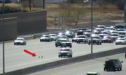 Cảnh sát Mỹ đuổi bắt chó làm loạn trên đường cao tốc