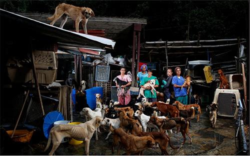 Trại giải cứu chó đi hoang ởLos Teques, Venezuela. Ảnh: Washington Post.