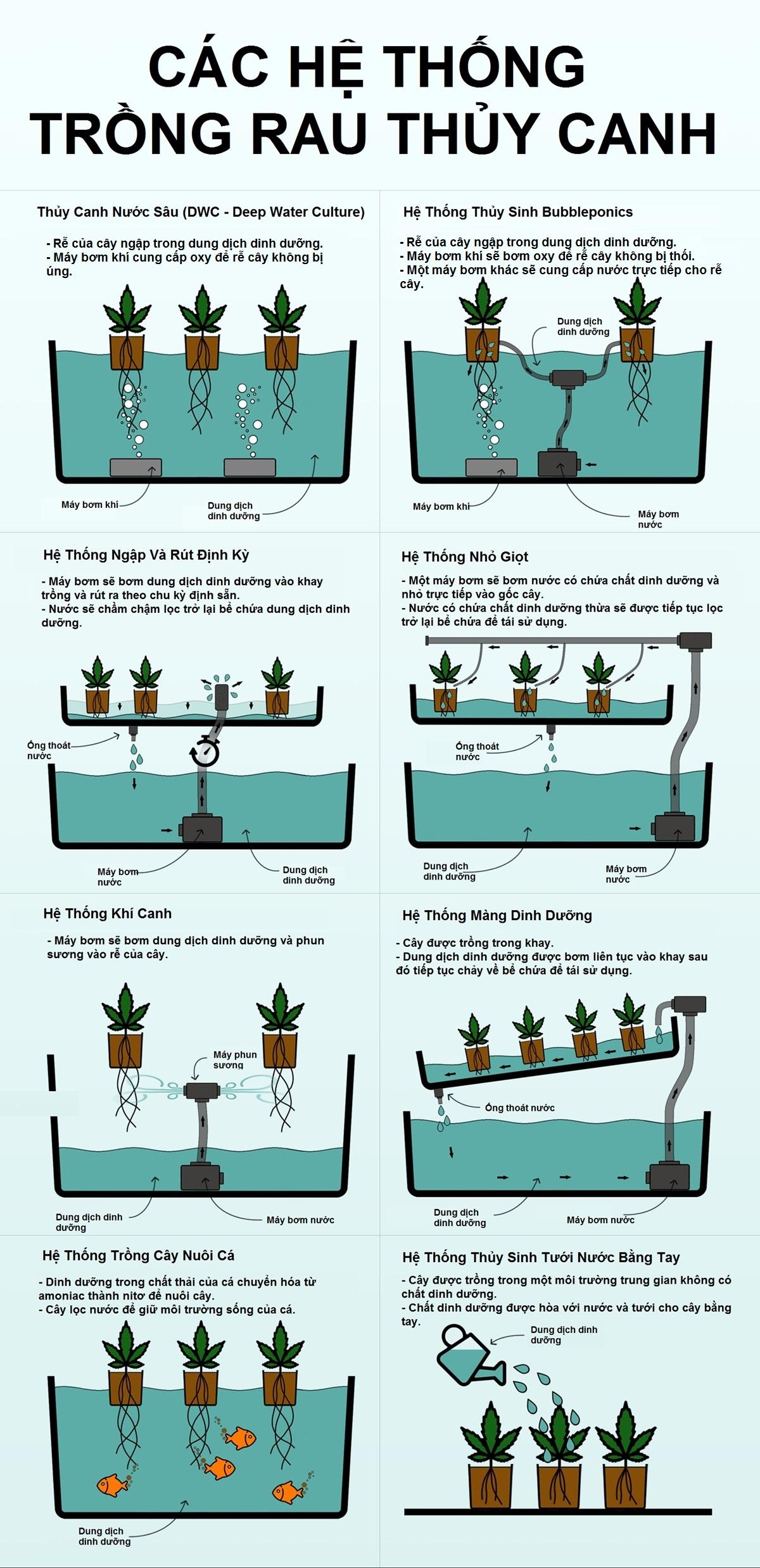Phân biệt các phương pháp trồng rau thủy canh