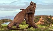 Nguồn gốc tên gọi của rồng Komodo