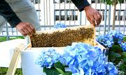 Khách sạn Mỹ nuôi 140.000 con ong mật giữa lòng thành phố