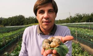 Nông trại nuôi ốc sên làm mỹ phẩm tại Italy