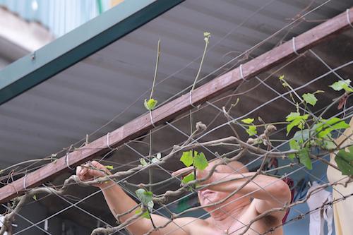 Khu dân cư ở Hà Nội lo lắng vì khỉ hoang quấy phá - 1