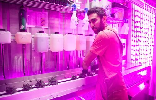 Em trai tỷ phú Elon Musk mở nông trại trồng rau trong container
