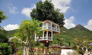 Căn nhà hai tầng trên cây thị gần 100 tuổi ở Nha Trang