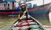 Những phụ nữ chèo ghe trung chuyển cá ở làng chài