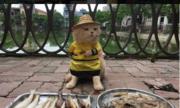 Mèo tên Chó nổi tiếng mạng XH được huấn luyện như thế nào?