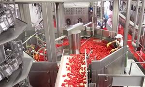 Dây chuyền làm cà chua đóng hộp kiểu Italy